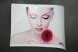 Selbstklebendes Vinyl, bedruckt mit 3,2 m (10 Fuß) Eco Solvent Drucker WER-ES3202